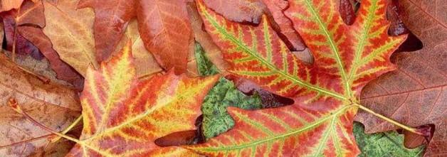 filastrocca-autunno